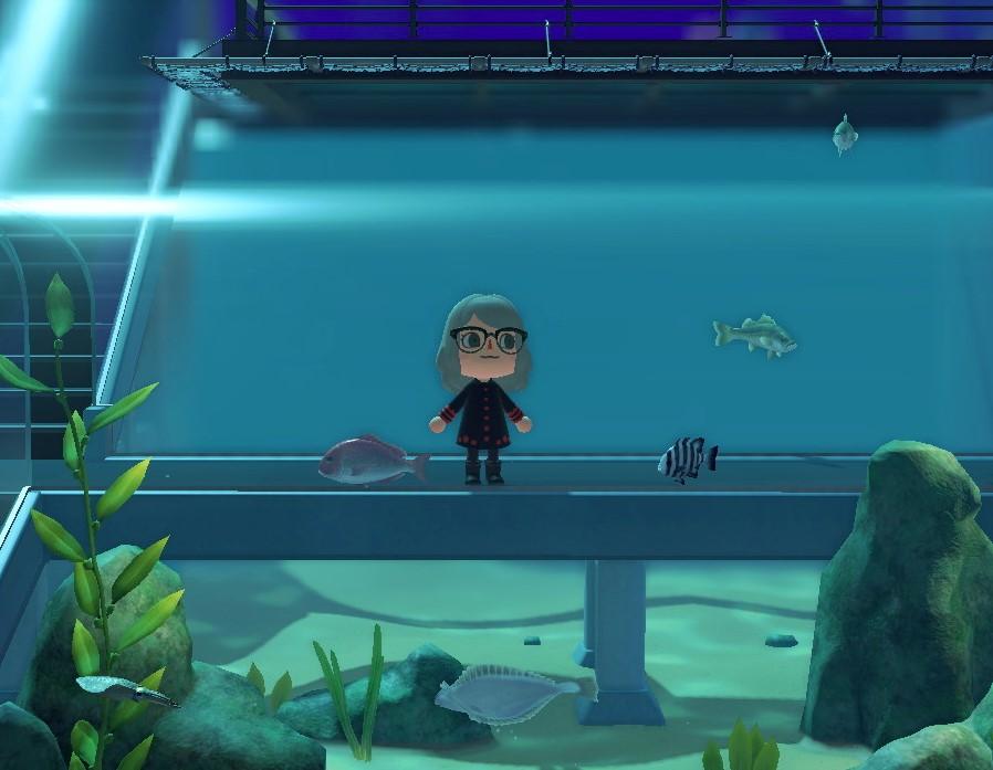 Un acuario que cerró por la cuarentena ofrece tours virtuales en el museo de Animal Crossing: New Horizons